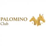 palomino horse riding bucharest